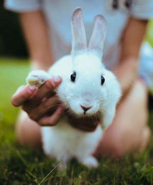 A photo of a bunny giving a high five.